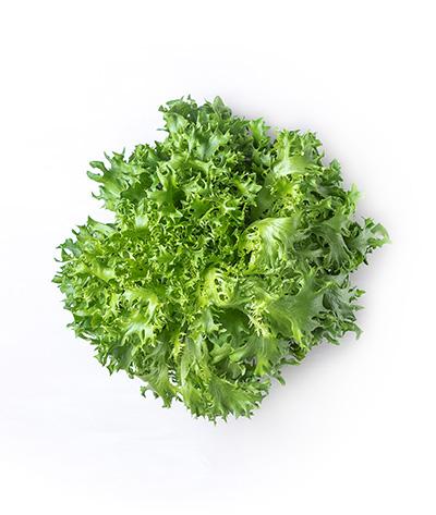 Green Sweet Lettuce