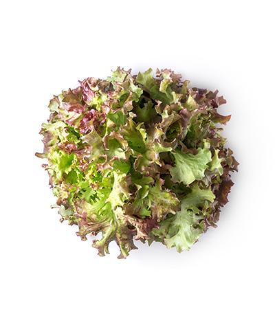 Redigo Lettuce